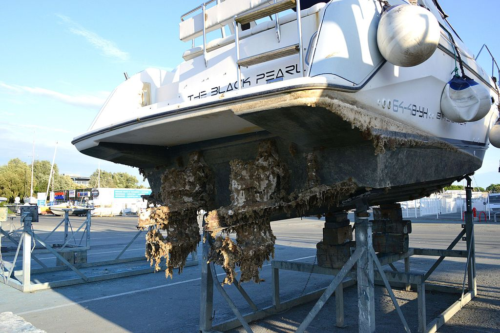 Biofouling op een boot. By Jean-Pierre Bazard Jpbazard GFDL from Wikimedia Commons